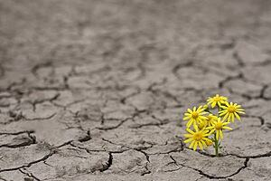 The image is of a barren land with something growing through the ground.