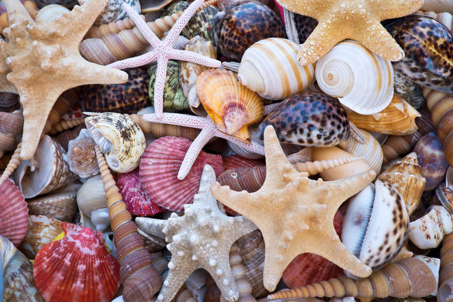 A collection of sea shells and starfish.