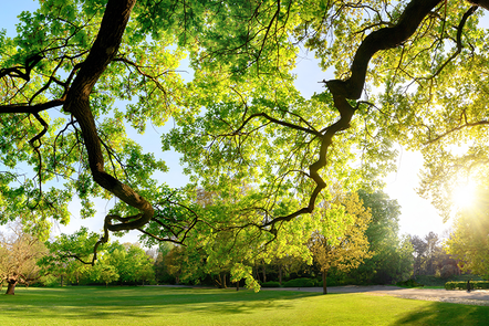 Image shows trees in a park.