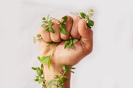 A hand grabbing a plant's flower