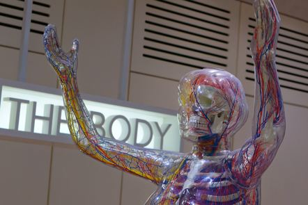 Sculpture of a human with transparent skin showing structures within a body.