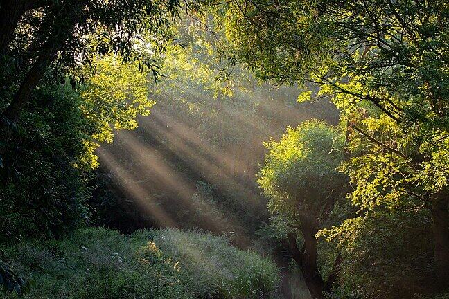 Beams of light shine through the beams of trees