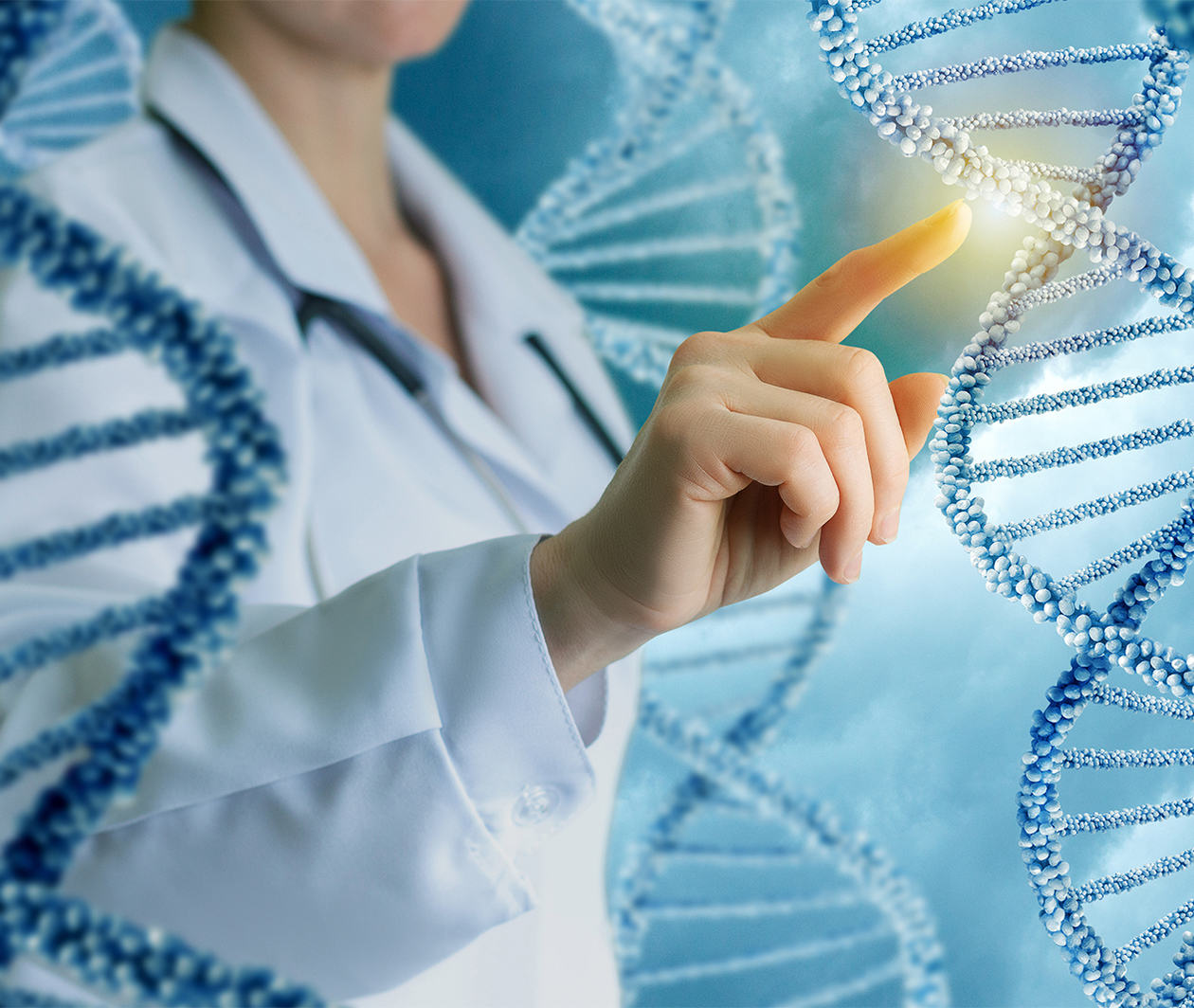 How Does the Body Use DNA as a Blueprint?