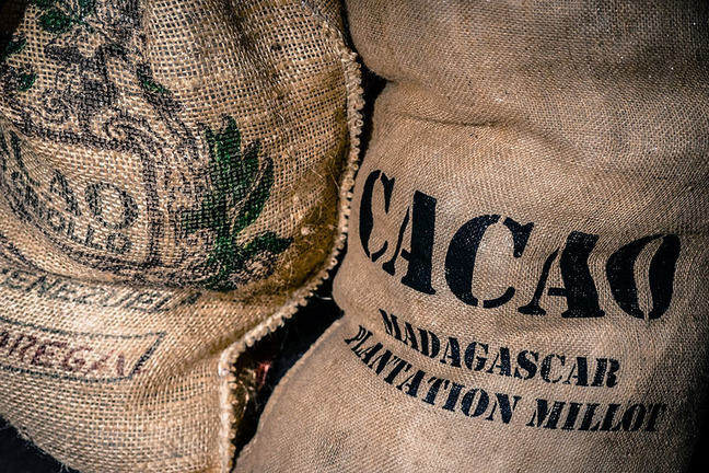 Cocoa beans in sacks