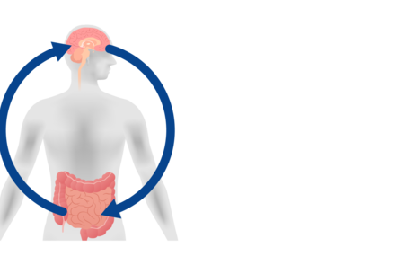 Image of a human body with arrows linking gut and brain