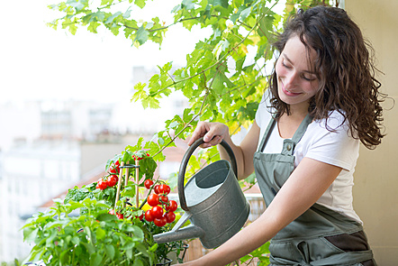 A woman watering the plants with a watering can.