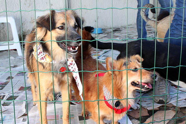 Two dogs behind a cage in Brazil. The dogs are standing on newspaper.