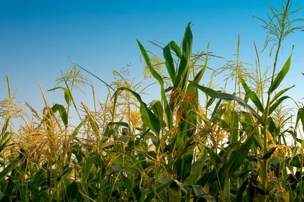 Lancaster University Global Food Security Course Image