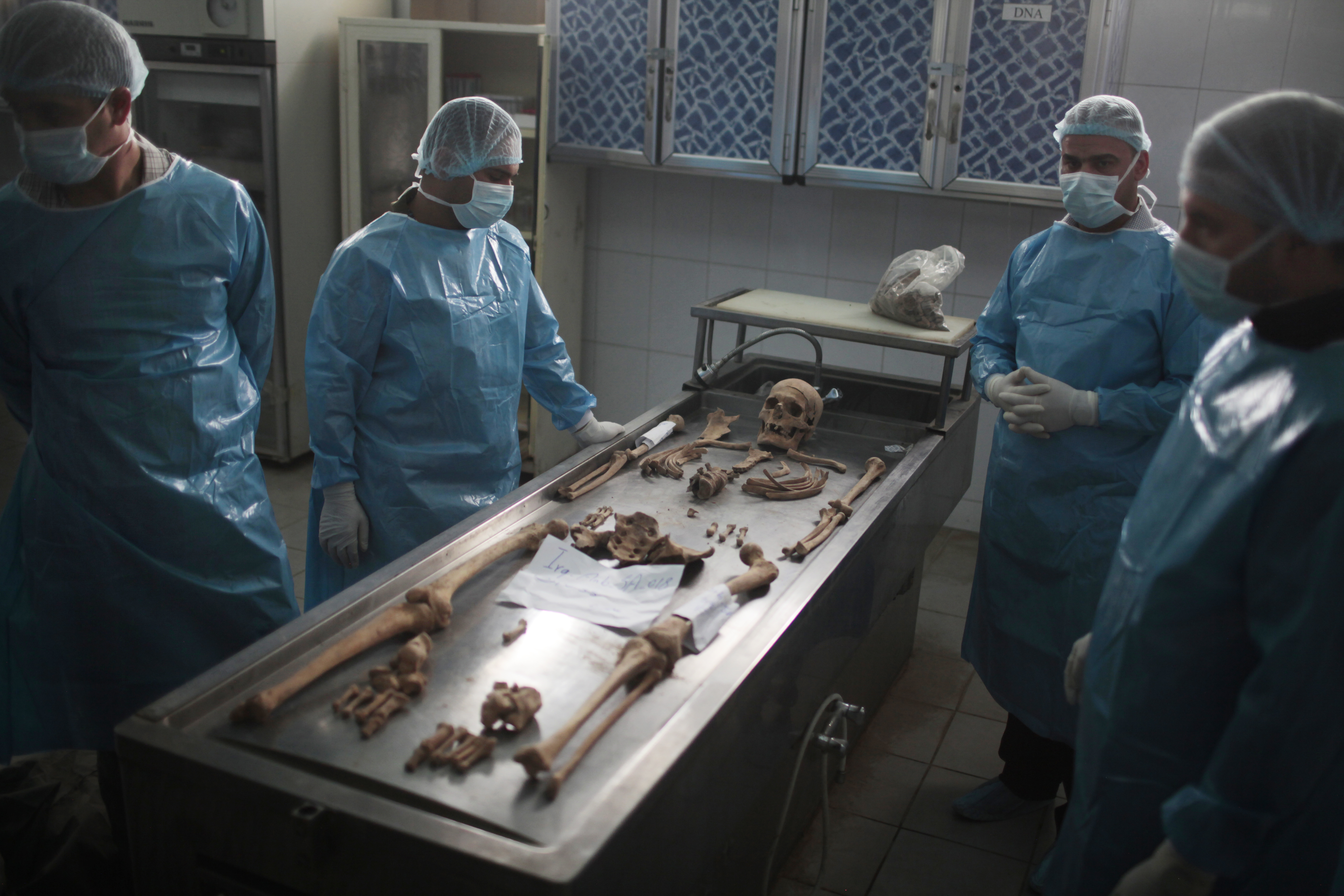 Anthropologists in a laboratory laying out a skeleton in anatomical position