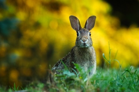 A hare in long grass