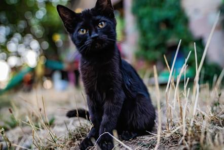 A photograph of a black kitten with yellow eyes, sitting on rough grass.