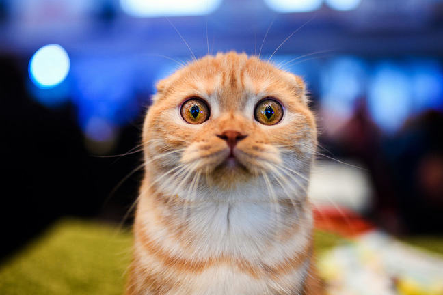 Funny cat looking a little surprised and a little freaked out