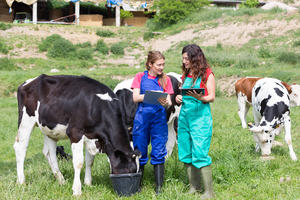 two veterinarians in a field with cows