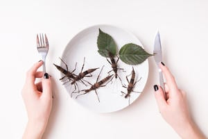 Hands holding a knife and fork about to eat a plate of stick insects