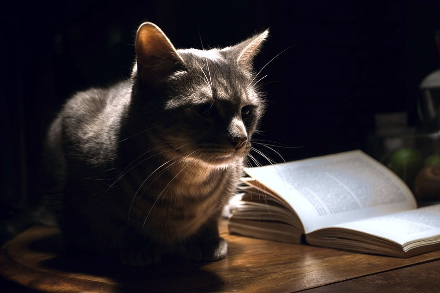 A cat with a book