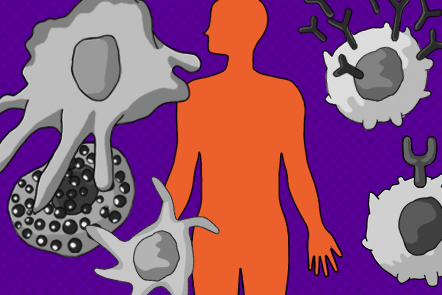 This illustration shows a human silhouette surrounded by cells of the immune system.