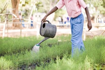 Person watering crops
