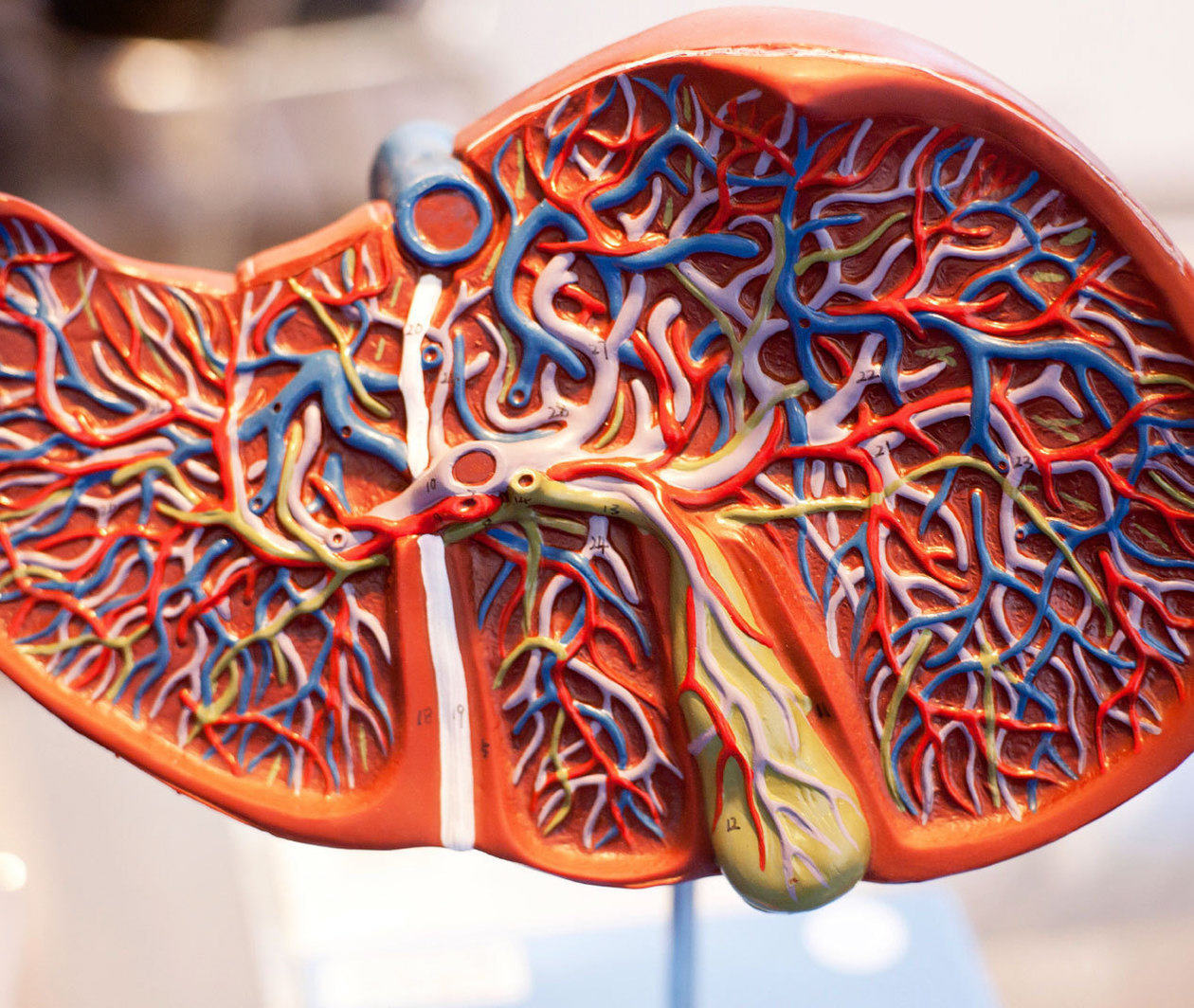 Liver Disease: Looking after Your Liver