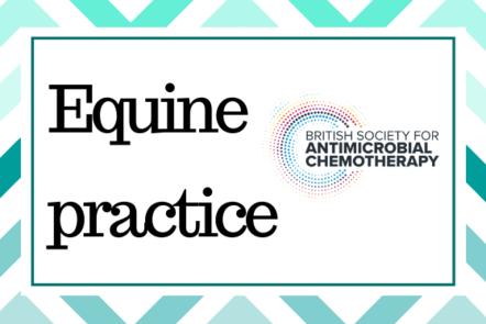 Equine practice