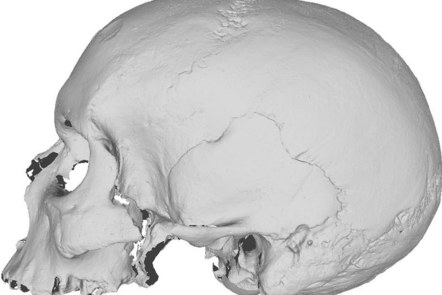 A grey-scale 3D scan of a skull in profile.