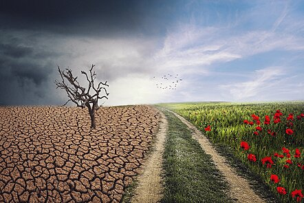A contrast in climate between a dry field and a fertile field