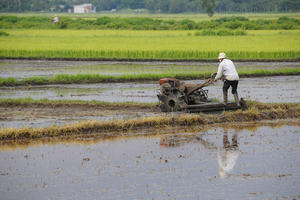 Viet Nam farmers working in the rice fields with assistance of tractor machines in southern Viet Nam