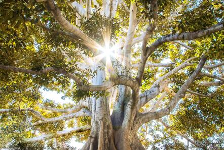 Sunlight through the branches and leaves of a twisty tree