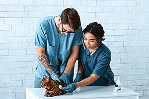 A man an a woman in scrubs examining a cat with a stethoscope