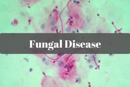 microscopic fungi