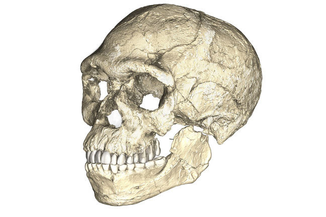 A composite reconstruction of the earliest known Homo sapiens fossils from Jebel Irhoud (Morocco) based on micro computed tomographic scans of multiple original fossils
