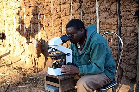 A man wearing a blue hoodie and beige trousers sits on a chair operating a microscope. He is looking at stool specimens using the Kato Katz technique to diagnose soil transmitted helminth infection.