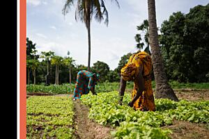 Farmers in Africa creating sustainable food sources