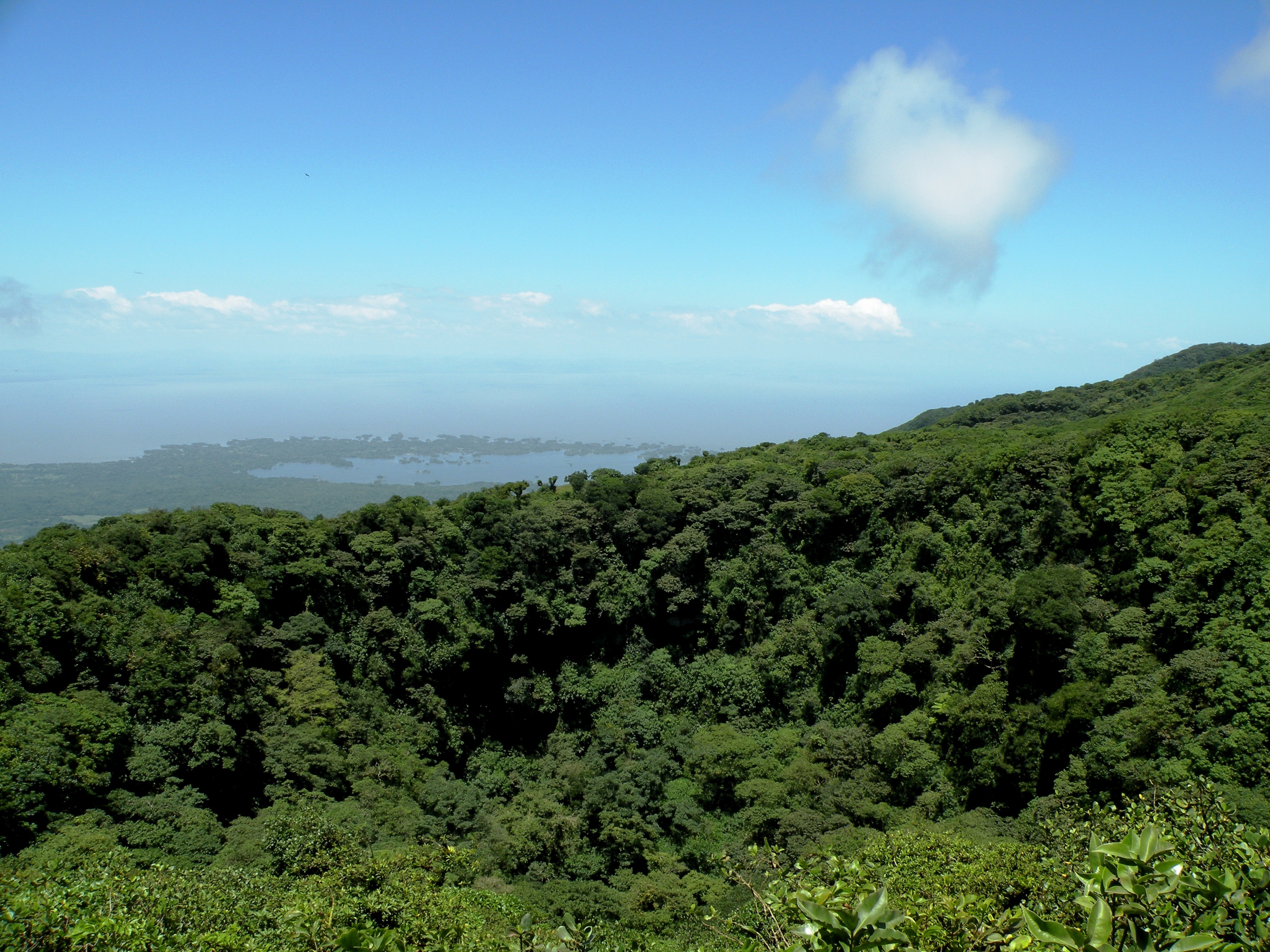 A photo taken high above a rainforest showing the tops of trees