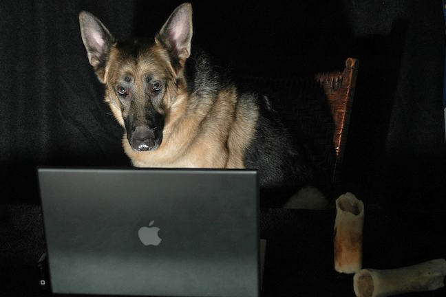 German shepherd dog on a computer