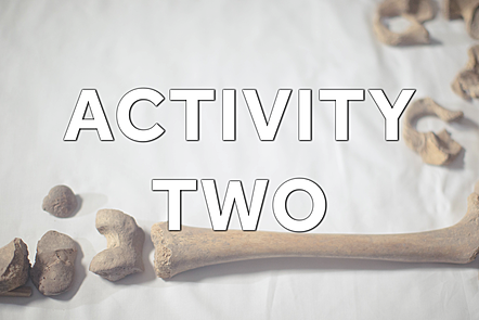 Text: Activity Two