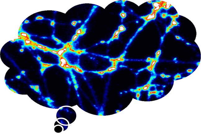 A fluorescent brain