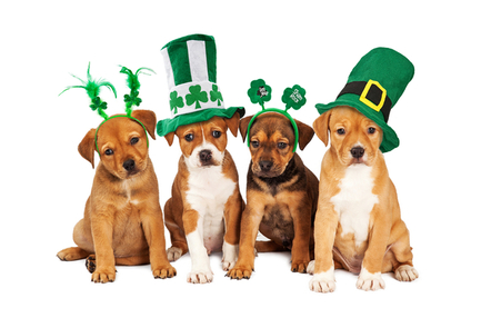 Four puppies dressed in St. Patrick's day materials.