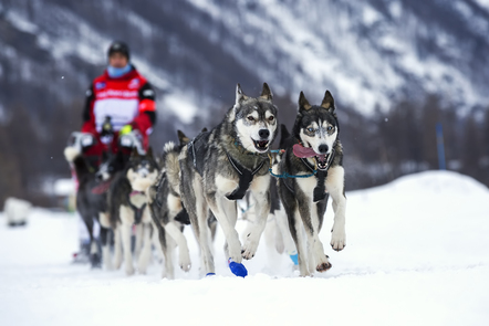 A man with dog sled