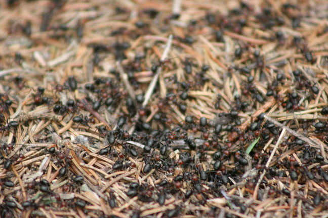 An ant colony as an example of a complex system