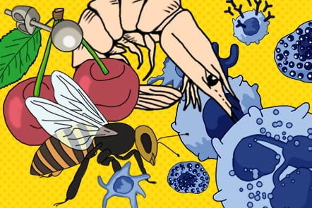 Image shows a collage of different allergens, like a bee, a shrimp or cherries and cells of the immune defence.