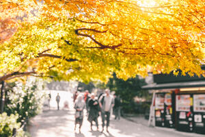 People walking in a park, with bright sunshine coming through the autumnal leaves of an overhanging tree.