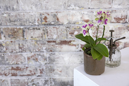 Potted orchid on a table top