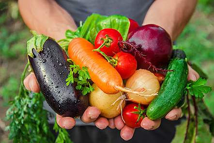 A person holding fresh vegetables on their hands.