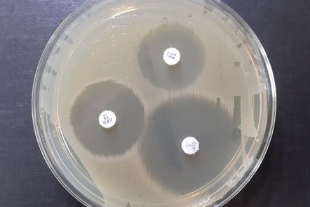 plate showing susceptible bacteria