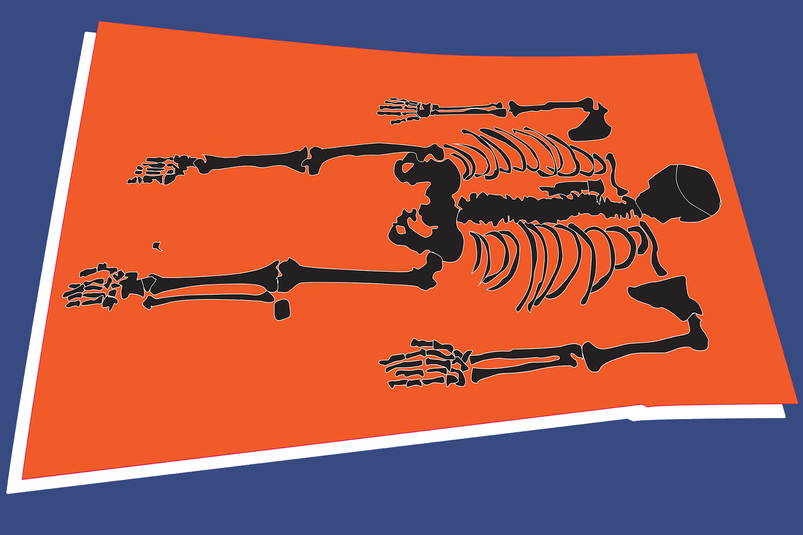 Illustration of a skeleton laid out for inspection