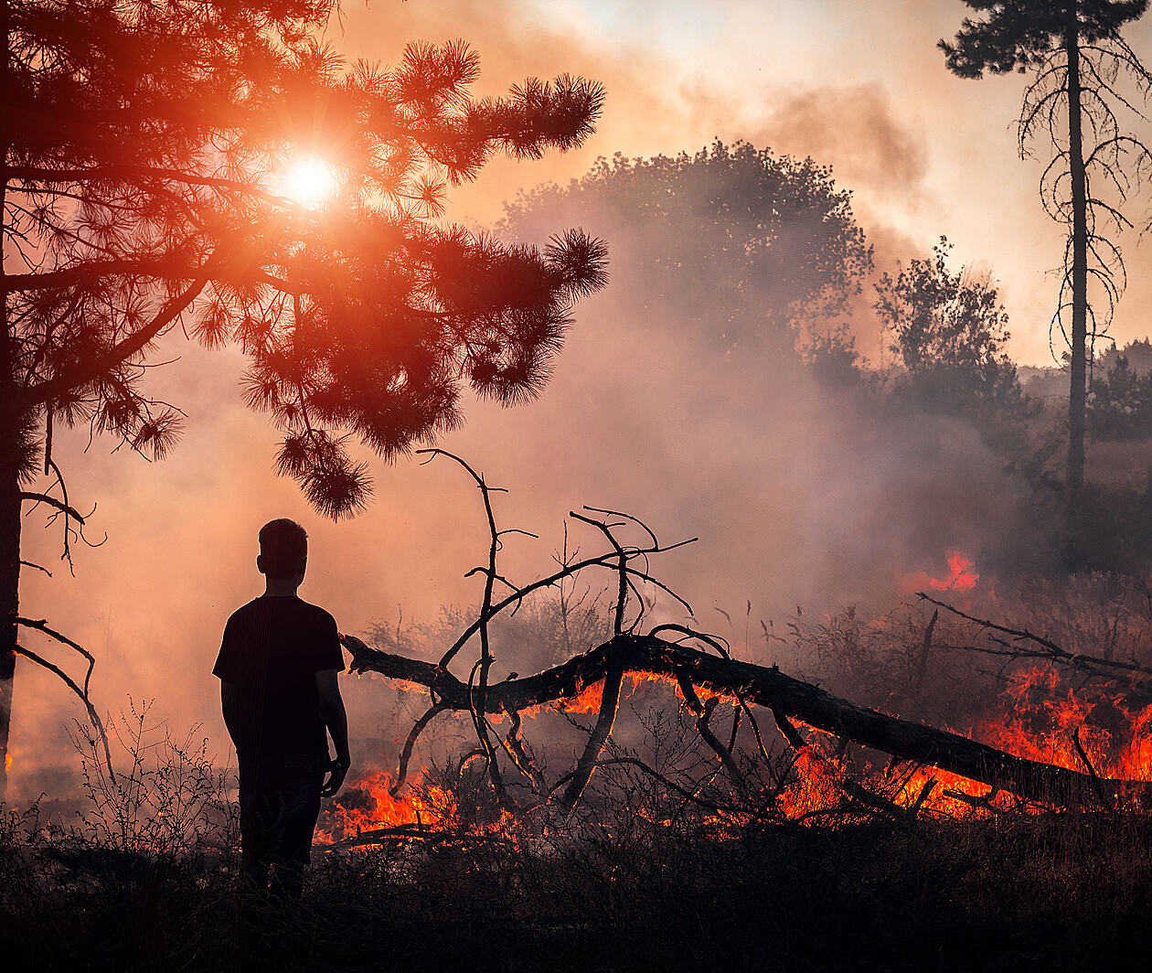 Bushfires: Response, Relief and Resilience