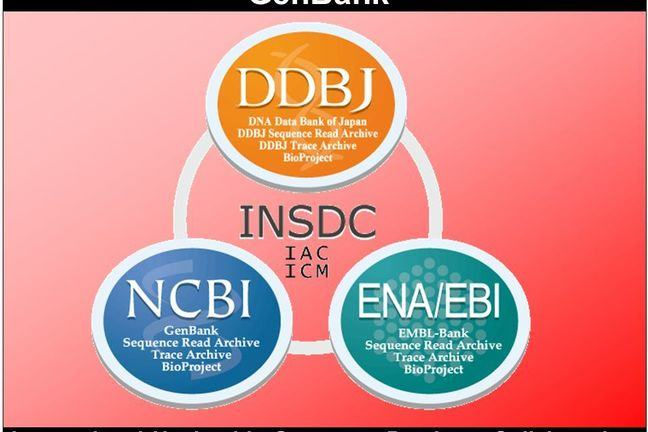 Primary Databases diagram with INSDC in the centre, DDBJ, ENA/EBI and NCBI in an outer ring