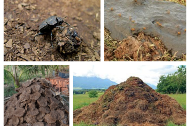 Different types of 'animal dung'