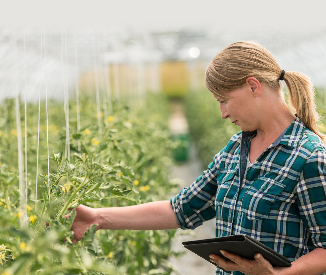 Explore How Farmers Produce Food Sustainably