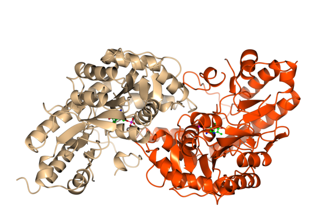 Structure of an enzyme